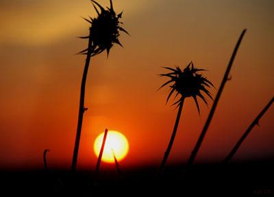 primavera primeta puesta