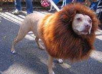 perro-disfraz-leon-s