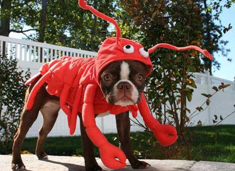 Resultado de imagen de perro marisco