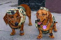perro-disfraz-militar-s
