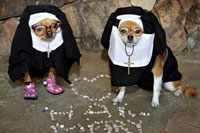 perro-disfraz-monja-s