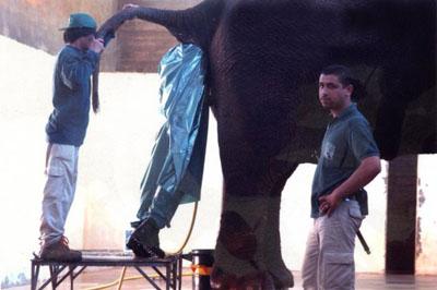 trabajo-apestoso-elefante-s