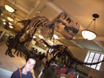 carmen en el museo de historia natural ss
