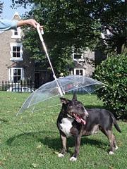 paraguas perros dog umbrella 1