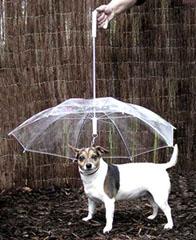 paraguas perros dog umbrella 2