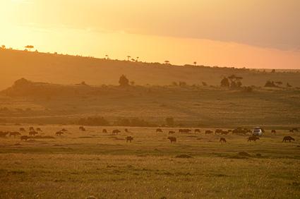bufalos atardecer masai mara kenia DSC_6779 s