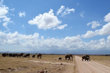 elefantes amboseli kenia DSC_1071 s