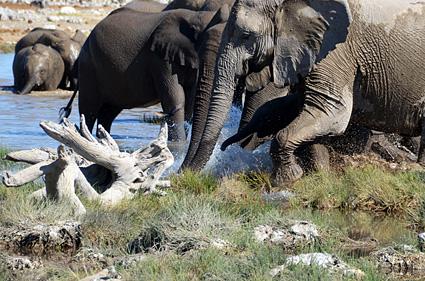elefantes etosha namibia DSC_7866 s