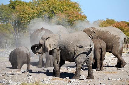 elefantes etosha namibia DSC_7870 s
