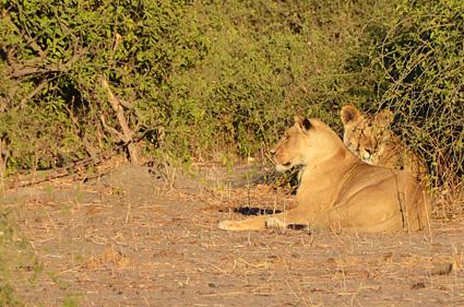 leonas en chobe botswana DSC_6511 s