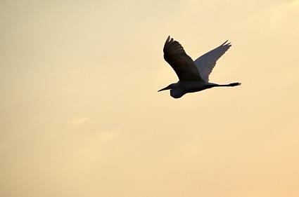 wind powered bird namibia DSC_3806 s