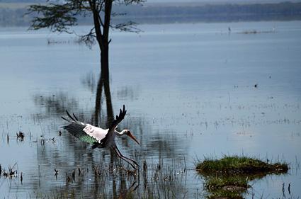 landing lago nakuru kenia DSC_8242 s